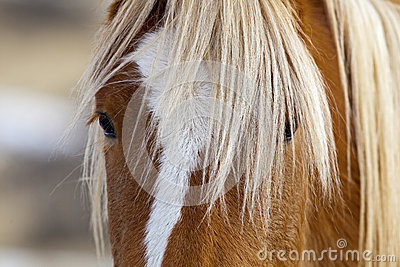 Eye and mane of Wild horse in Wyoming desert