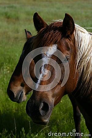 Free Wild Horses Royalty Free Stock Photography - 1370937