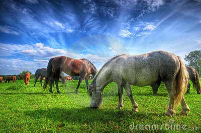 Wild horses on the field