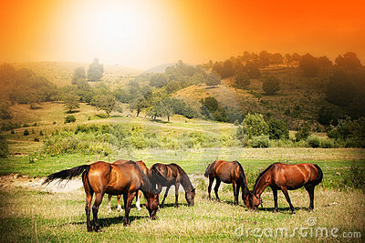 Wild horses on green field and sunny sky