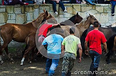 Wild horses Editorial Stock Photo