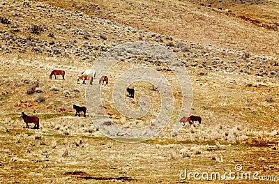 Wild Horses on Hillside