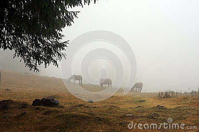 Wild horses on the mountain