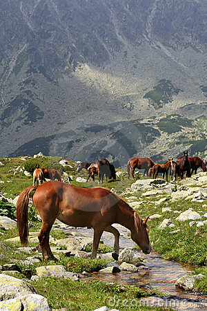Free Wild Horses On Brook Bank II Royalty Free Stock Photography - 2151117