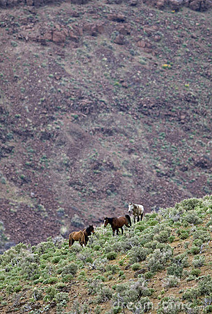 Free Wild Horses On Hillside Royalty Free Stock Photo - 2338145