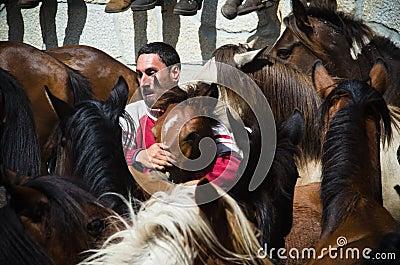Wild horses Editorial Photography