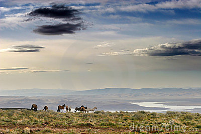 Wild Horses on Ridge