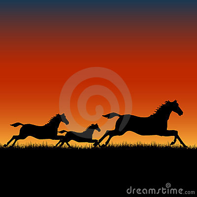 Free Wild Horses Running At Sunset Royalty Free Stock Image - 9473066