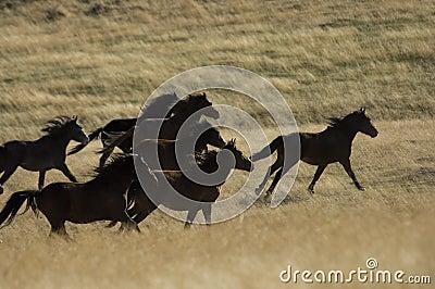 Wild horses running in tall grass