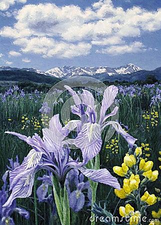 Wild Iris H1