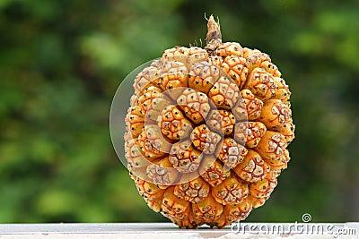 Wild jackfruit