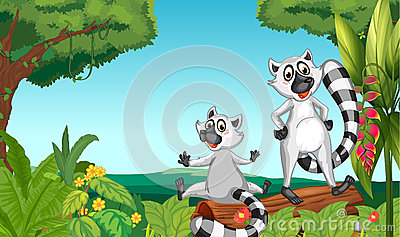 Wild lemurs in the woods