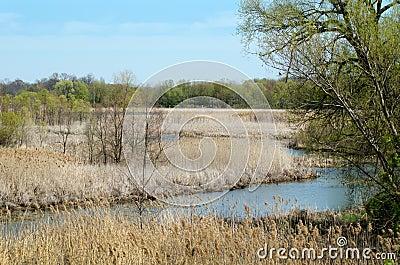 Wild moerasland