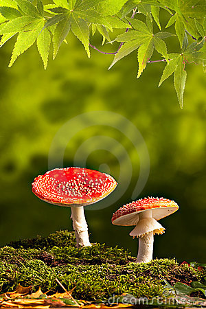 wild mushroom fall autumn background copy space