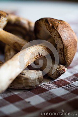Wild Mushrooms