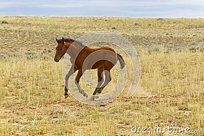 Wild Mustang Newborn Foal