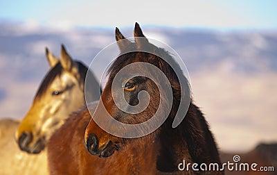 Wild Mustang Pair