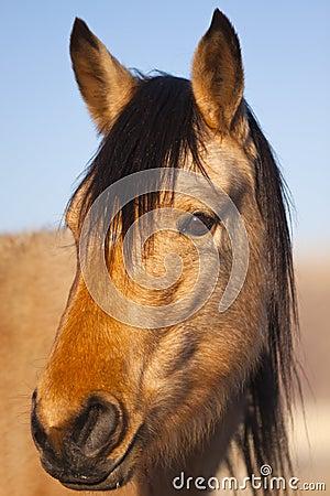 Wild Mustang Portrait