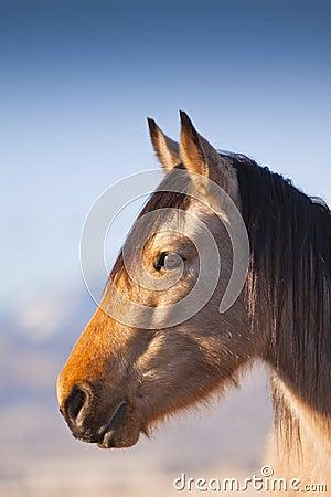 Wild Mustang Profile