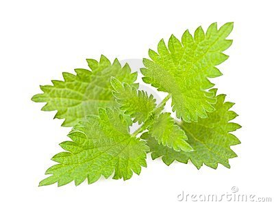 Wild nettle Stock Photo