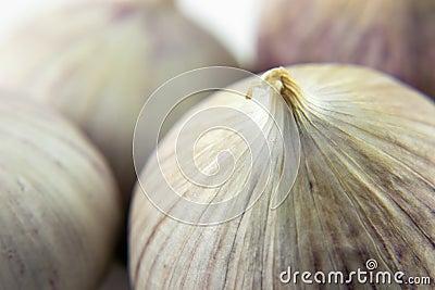 Wild onion garlic