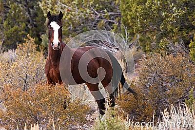 Wild Open Range Horse