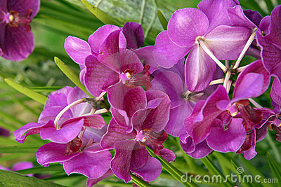 Wild Orchid.
