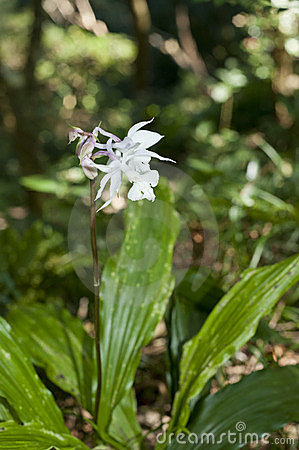 Wild orchid flower bloom on forest land
