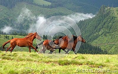 Wild paarden