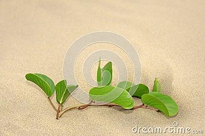 Wild plant grow on beach sand