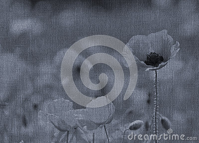 Wild poppy abstract