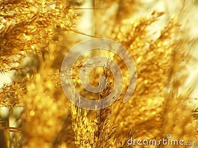 Wild reed detail