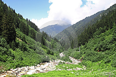 Wild river in a valley