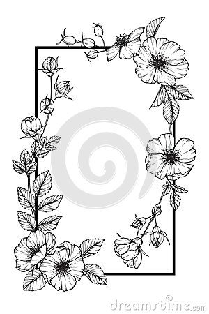 Free Wild Rose Flower Frame Flower Drawing And Sketch. Royalty Free Stock Photo - 101722905