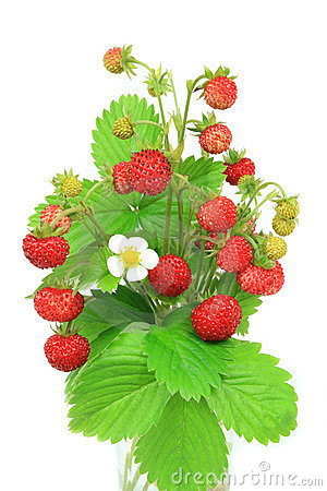 Free Wild Strawberries Royalty Free Stock Photo - 5404985