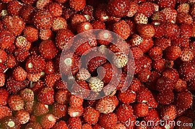 Wild strawberries  background