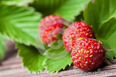 Wild strawberries on green leaves