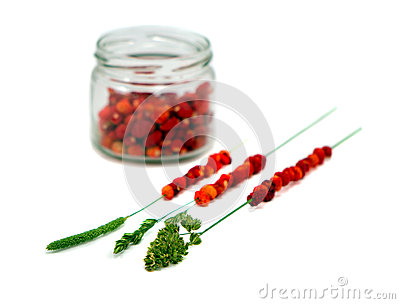 Wild strawberries in pot string on bent isolated