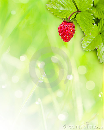 Wild strawberry background