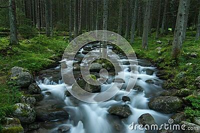 Wild stream in Low Tatras