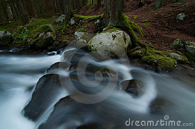 Wild stream in Low Tatras