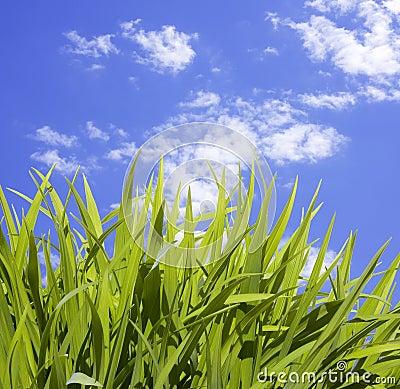 Wild Tall Grass