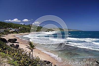 Wild Tropical Beach