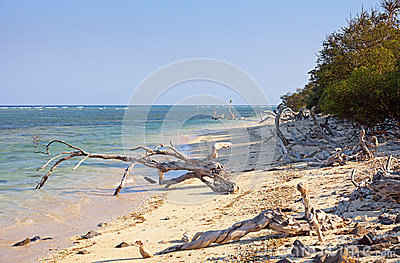 Wild tropical beach littered with driftwood