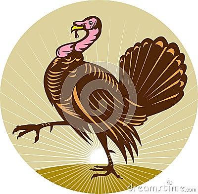 Wild turkey walking side