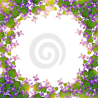 Wild violet border