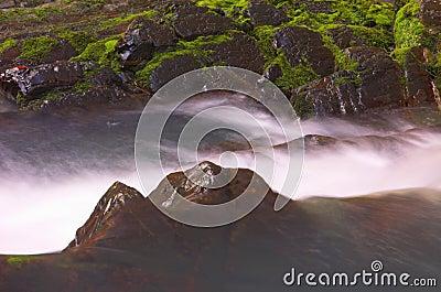 Wild waterfall and moss
