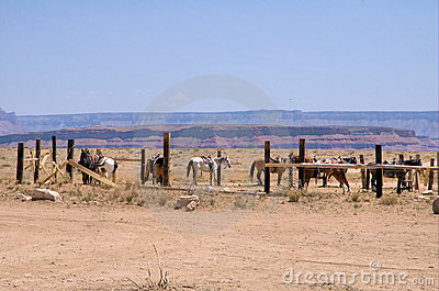 The wild west 3
