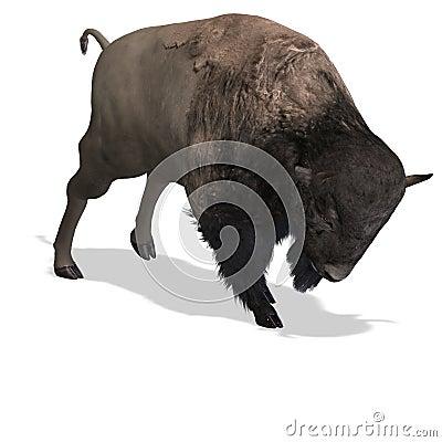 Wild West Bison