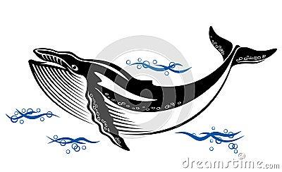 Wild whale